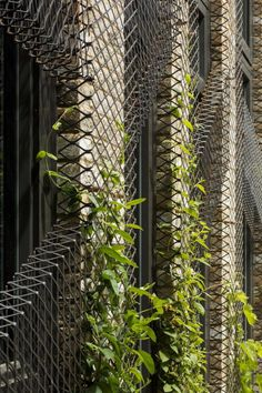 forest-mews-3-houses-arranged-around-multi-functional-shared-outdoor-courtyard-urban-brownfield-site-16