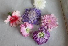 Forget the lengthy process of making sugar flowers. Instead, top your next cake with real flowers that you can eat!