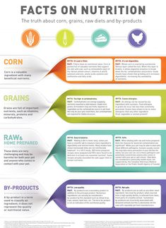 The truth about corn, grains, raw diets and by-products.