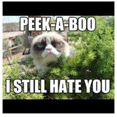 cough, cough Grumpy Cat, Animal Memes, Funny Cats, Pets, Animals, Jokes, Animals And Pets, Animales, Chistes