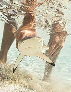 SHARK WEEK! @Brittany Hernandez !!!! I WANT ONE<3 ....^finsup^
