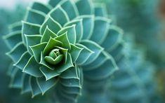Nature Spiral Bokeh Micro Wallpaper Desktop Backgrounds Wallpaper