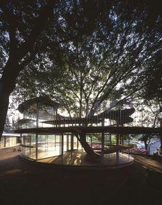 El atardecer y la estructura, el árbol como protagonista. Tezuka Architects: Ring around a tree—