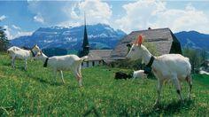Bern Region - Schweiz Tourismus