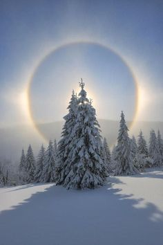Halo And Snow Covered Pine Trees Fichtelberg Ore Mountains Germany |
