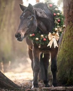 Christmas Horses, Beautiful Horses, Equestrian, Beautiful Pictures, Daughter, Country, Nature, Horses, Pony
