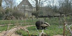 A-maze-ing living willow maze opening soon at Sudeley Castle! http://www.gloucestershirewildlifetrust.co.uk/news/2015/03/12/maze-ing-living-willow-maze-set-open-sudeley-castle