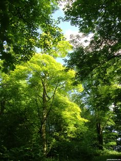One of my favourite pictures ever, taken in Wytham Woods.