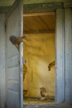 Abandoned House in the Woods Taken Over by Wild Animals. Photos by Kai Fagerström Cottage In The Woods, House In The Woods, Abandoned Houses, Abandoned Places, Forest Animals, Wild Animals, Funny Animals, All Gods Creatures, Woodland Creatures