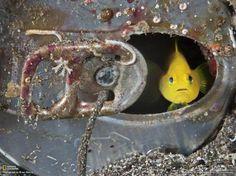 pez-triste