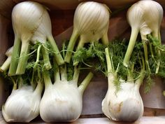 Fennel This flavorful herb is a great remedy for bloating, indigestion, and water retention. Fennel can be brewed into a tea and can help get rid of your body's excess water, sodium, and potassium content.