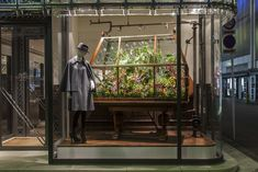 ~~ Orchid Display: Maison Hermes Window-Display of Orchids, Hermes Japan Copyright: Satoshi Asakawa Exotic Plants, Green Plants, Azuma Makoto, Hermes Window, Hermes Store, Plant In Glass, Flower Artists, Japanese Flowers, Alpine Plants