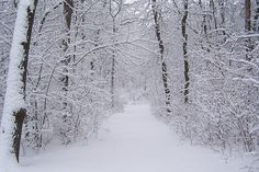 Winter Scenery by steven_t_will, via Flickr
