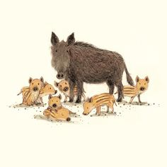 Wild Boar & piglets by Briony May Smith Cute Animal Illustration, Character Illustration, Graphic Illustration, Animals And Pets, Baby Animals, Cute Animals, Obelix, Rabbit Art, Mundo Animal