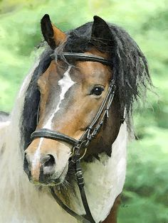 'Pferdeporträt, Kopf 2' von Dirk h. Wendt bei artflakes.com als Poster oder Kunstdruck $18.03