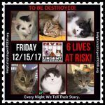 TO BE DESTROYED 12/15/17 http://nyccats.urgentpodr.org/tbd-cats-page/