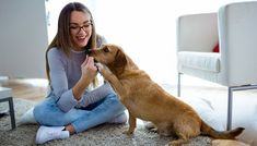 25 Best Dog Breeds for Small Apartments - Top Dog Tips