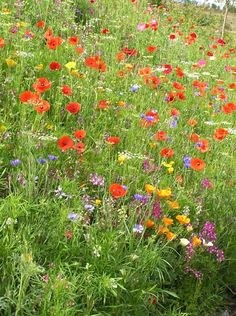 Discover how to create your own pictorial meadow for a natural looking, wildlife friendly flower garden. Sarah Raven shares her knowledge. Garden How to sow your own pictorial meadow Garden Types, Eco Garden, Meadow Garden, Seaside Garden, Garden Water, Natural Garden, Low Water Landscaping, Garden Landscaping, Landscaping Ideas