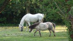 Unberührte Natur und frei laufende Pferde - hier in Wörlitz gesehen.