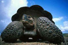 Galapagos :-)