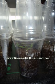 This idea is GENIUS! Start Seedlings in Plastic Cup Greenhouses.