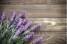 Bring Pops of Summer Hues into Fall: Mix Pastels with Naturals Tones - Life Rooted in Design Buy Lavender Plants, Indoor Lavender Plant, Lavender Plant Care, Lavender Garden, Lavender Blue, Indoor Garden, Indoor Plants, Inside Plants, Herbs Indoors