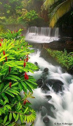 Tabacón, Costa Rica | Tabacón is a hot springs resort in the Alajuela Province of Costa Rica, located at the northern base of Arenal Volcano between Lake Arenal and the town of La Fortuna. The geothermal springs are heated naturally by the volcano. ~Wikipedia #travel #explore