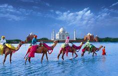 Camellos y Taj Mahal