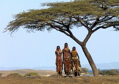 I love the thorn trees all over Africa