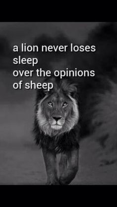 A lion does not lose sleep over the opinion of sheep