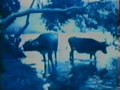 YouTube Diana, Moose Art, Cinema, Note, Film, Youtube, Animals, Movie, Movies