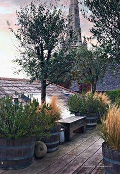 Barrel container terrace garden; Rose Uniacke