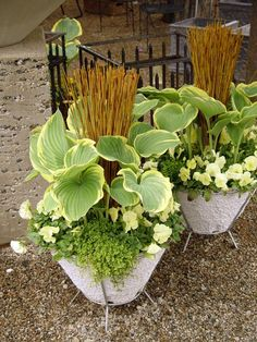 Dirt Simple   Gardening and Landscape Blog by Deborah Silver - Part 4