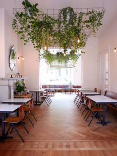 Top Hanging Plants Tips Top Hanging Plants Tips! - Top Hanging Plants Tips! - Top Hanging Plants Tips Top Hanging Plants Tips! - Top Hanging Plants Tips! Deco Restaurant, Restaurant Design, Restaurant Healthy, Healthy Cafe, Hanging Plants, Indoor Plants, Porch Plants, Indoor Garden, Cafe Design