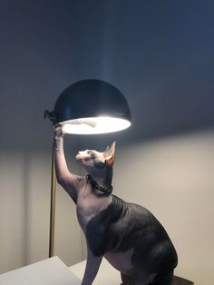 My cat and a lamp : Pet_Renaissance Instagram Handle, Cats Of Instagram, Animals And Pets, Cute Animals, Alien Logo, Cat Day, Dog Days, All Art, Troll