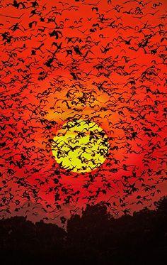 Bat Blizzard ~ by Greg du Toit on 500px