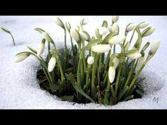 The Messenger of Spring  -  Music -Giovanni Marradi -