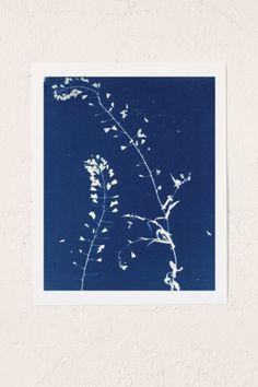 Erica Popp After Anna Atkins Art Print