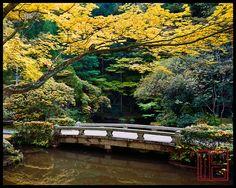 Honen-In  #kyoto #Japan