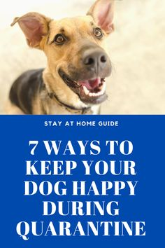Quarantine Dog Training - 7 ways to keep your dog happy during while you work from home Dog Separation Anxiety, Dog Anxiety, Best Dog Training, Brain Training, Dog Enrichment, Dog Training Techniques, Dog Games, New Things To Learn, Fun Things
