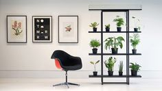 A new shelf automatically waters plants so you don't have to. It's made by a start-up based in Amsterdam called Pikaplant. Room With Plants, Office Plants, Plant Shelves, Shelf Design, Water Plants, Potted Plants, Minimalist Design, Plank, Shelving