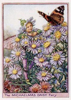 Michaelmas Daisy Flower Fairy Vintage Print c1950 by TheOldMapShop