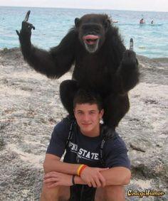 Chimp flips the bird at beach!