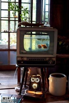 Upcycle - updated link recycle an old TV into a fish tank. I have ALWAYS wanted to do this!!