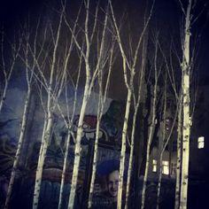 Bei einer kleinen nächtlichen Berlin-Tour trifft man schon mal auf einen Birkenwald in der Sradt.