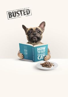 Busted : How to get a neighbor's cat | #ads #adv #marketing #creative #publicité #print #poster #advertising #campaign < repinned by www.BlickeDeeler.de | Have a look on www.Printwerbung-Hamburg.de