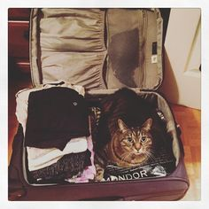 Might need to repack.  #cat #Chababa #catstagram #instakitty #packing #suitcase #cute #trip #travel #tabby #tabbycat #gonnamissher #catsofinstagram #photooftheday