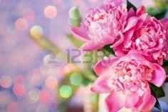 pink peonies: beautiful bouquet of flowers, pink peonies