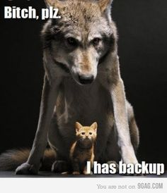 memes Hilarious animal pictures Cats are cute and sometimes unintentionally do stupid funny things, so we have collected some the funniest and most hilarious cat memes and pictures hope you will enjoy em. Funny Animal Quotes, Cute Funny Animals, Funny Cute, Funny Dogs, Cute Cats, Easy Animals, Animal Humor, Funny Animals With Captions, Mom Funny