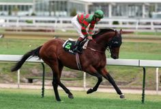 Black Knight (27 August 1979–2002) was an Australian Thoroughbred racehorse. He was best known for winning the Melbourne Cup at Flemington Racecourse in November 1984.